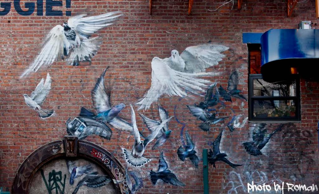 lee pigeons roman